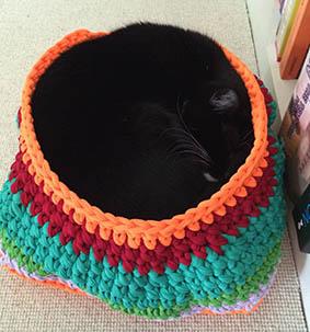 sovende kat i kurv